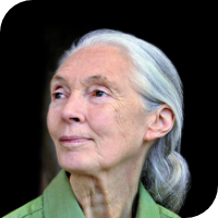 Dr Jane Goodall